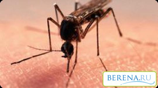 Комары предпочитают кусать маленьких детей, ведь у них кожа нежнее, чем у взрослых