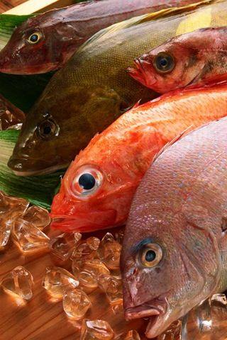 прикорм рыбы ребенку