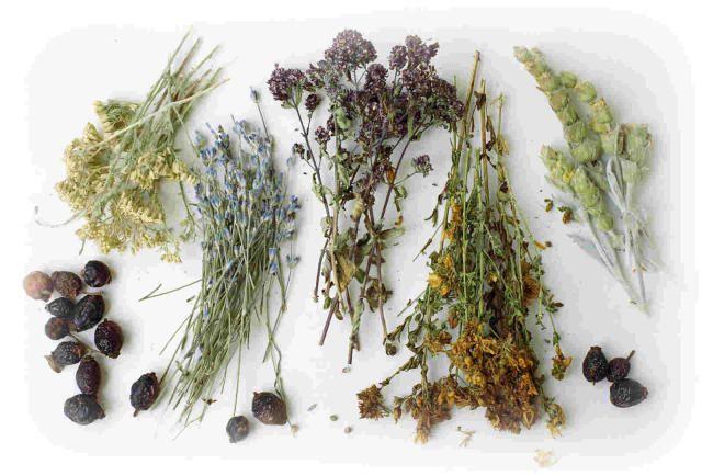 какие травы используют для похудения